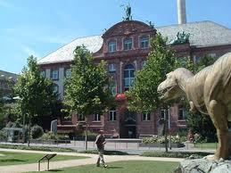 Зенкенбергский музей Франкфурта
