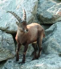 Альпийский зоопарк в Австрии